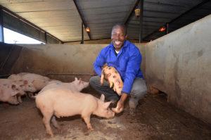 Pig farmer in piggery